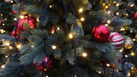 Al eeuwenlang wordt de spar gebruikt bij feesten. Zelfs voordat het traditie was om er cadeautjes onder te leggen.