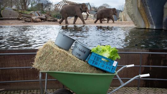 Er zijn vier stappen nodig van olifantenpoep naar compost.