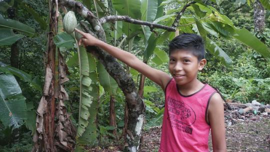 Naast het huis van Delmonth in het regenwoud van Costa Rica groeit cacao.