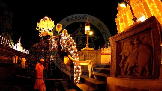 In Sri Lanka wordt het kandar festival uitbundig gevierd.