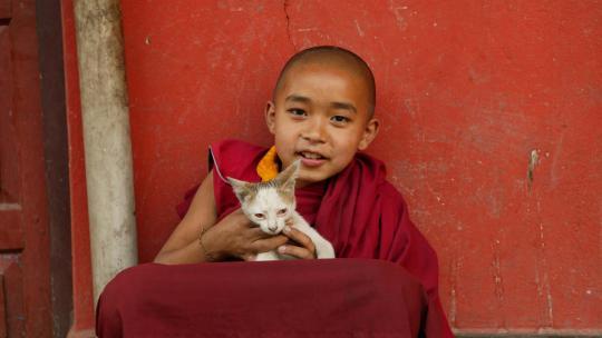 De vierde wijsheid van het achtvoudig pad is dat je mensen of dieren geen kwaad mag doen.