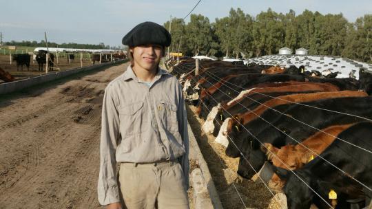Op de lage, zoute delen van de pampa, waar soja niet kan groeien, lopen kalfjes en jonge stiertjes. Maar om ze vet te mesten moeten de dieren naar de 'feedlots', de voederplekken, waar geen gras groeit. Er bestaan feedlots van wel 36.000 koeien!