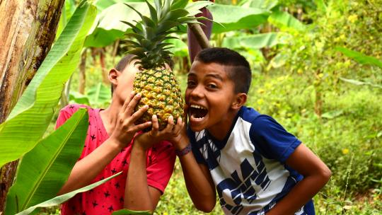 De ananas is rijp.