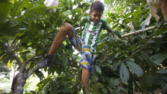 Kevin moet soms hoog klimmen om een vrucht te oogsten.