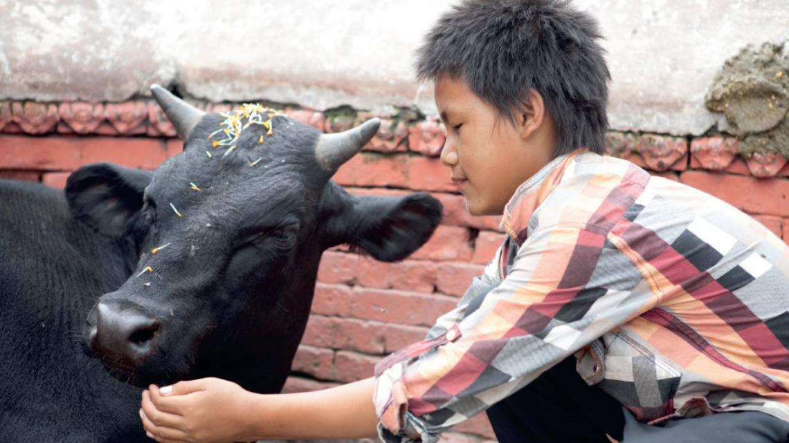 """Joshan (13) uit Kathmandu in Nepal heeft nog een ander idee over waarom koeien heilig zijn: """"In de verhalen over onze goden reed god Shiva op een stier,"""" vertelt hij. """"Shiva is heel belangrijk, daarom eren we koeien."""""""