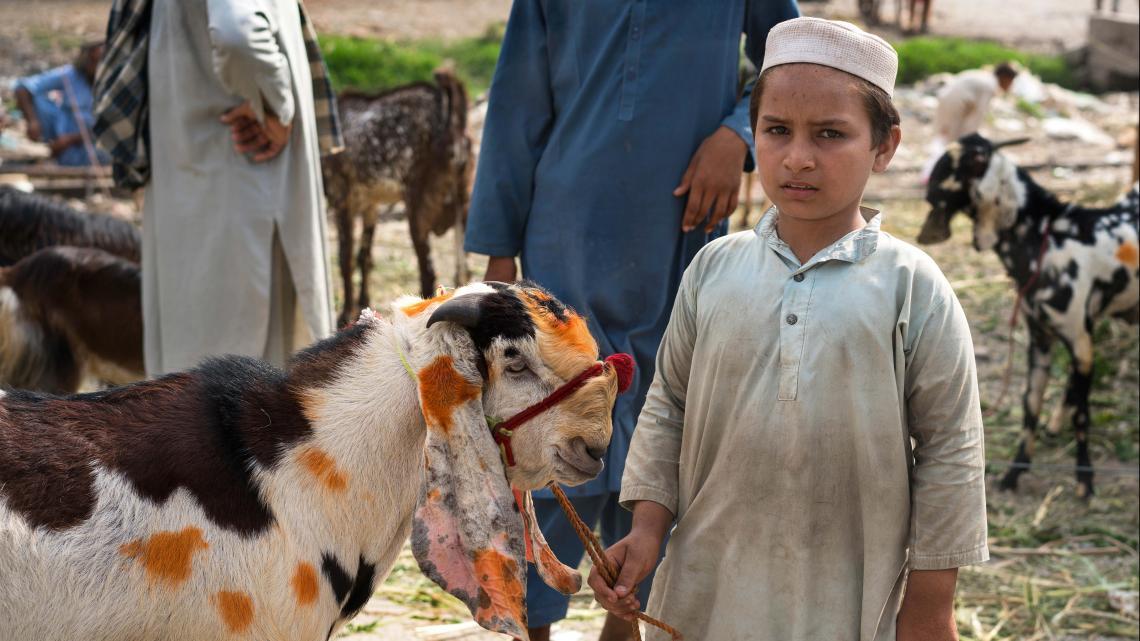 Deze jongen poseert met een offerdier op een markt in Pakistan.