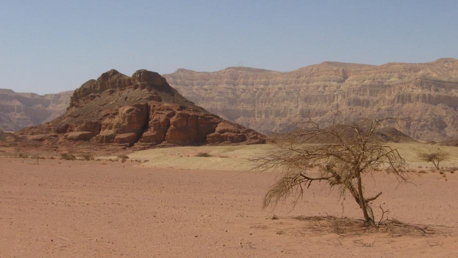 Woestijn-Israel