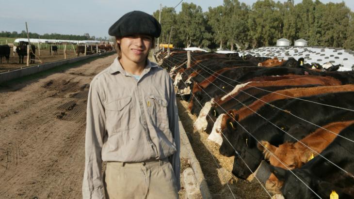 Argentinie koeien