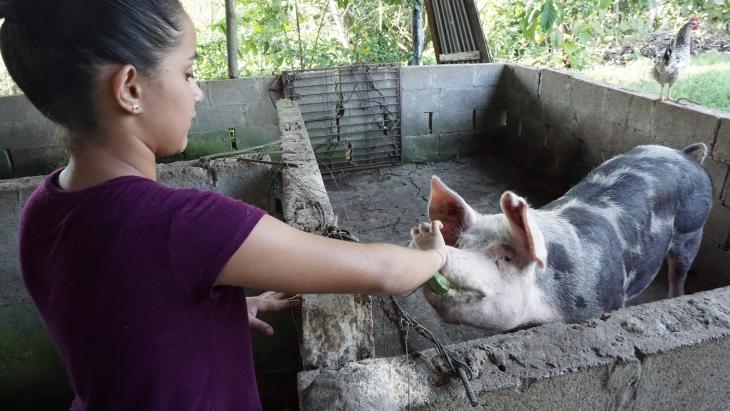 Op de boerderij van Niky hergebruiken ze alle poep van de varkens en koeien.