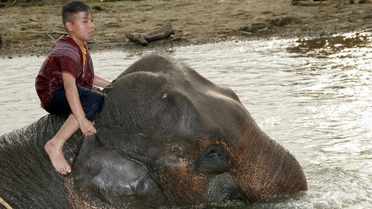 De Thaise Thara Wut neemt Kamsen mee voor een bad in de rivier.