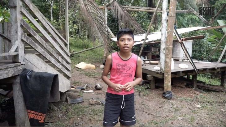 Delmonth in het regenwoud