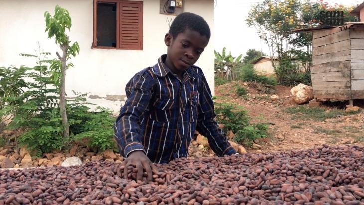 Enim bij gedroogde cacaobonen