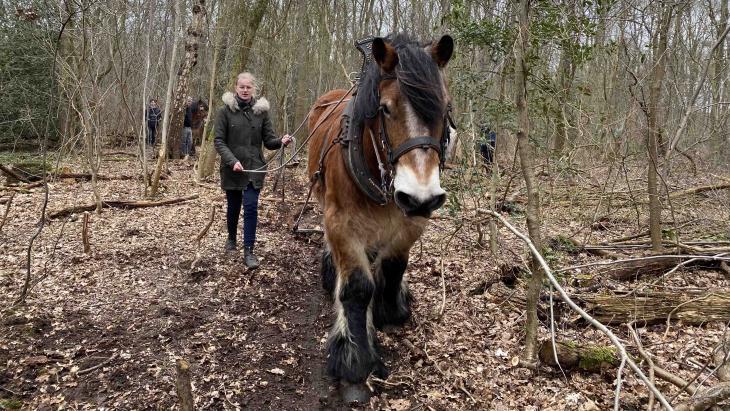 Tirsa deed mee met een cursus boomslepen met paarden.