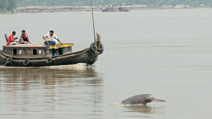 Deze zeldzame dolfijn leeft in de rivieren van Bangladesh.