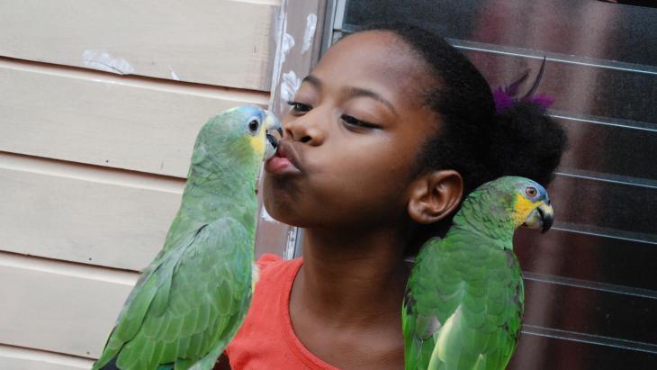 """Lora zegt nog veel meer: """"Papa, mama"""" en """"kusjes geven!"""" Papegaai lieverd roept niets. Zij is nog te jong om te praten. Maar ze kan wel kusjes geven!"""