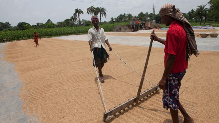 In Bangladesh wordt het door verzilting steeds moeilijker rijst te verbouwen.