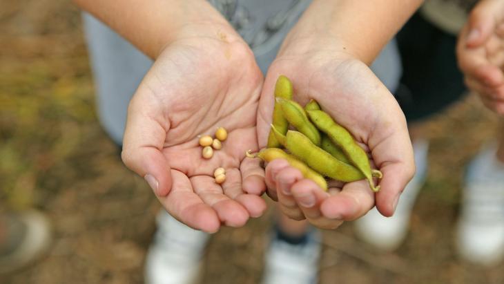 Sojabonen worden verbouwd in landen als Amerika en Argentinië.