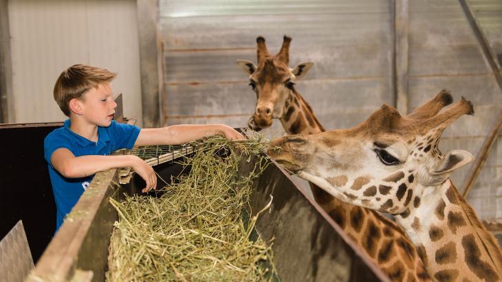 In deze dierentuin krijgen de giraffen fairtrade sojabrokken.