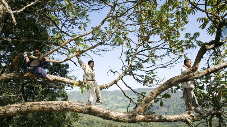Haftamou en zijn vriendjes vinden het spannend om in hoge bomen die ver over diepe afgronden hangen, naar vogelsnestjes te zoeken. De vogeleitjes die ze vinden, staan 's avonds tijdens het diner op tafel.