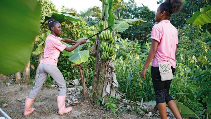 Om bananen te oogsten heb je spierballen nodig.