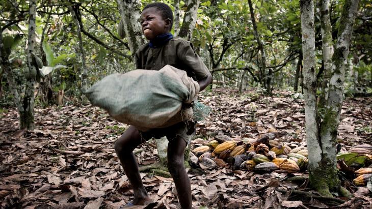 Jean-Baptiste (9) uit Ivoorkust gaat niet naar school, maar sjouwt elke dag op de plantage van zijn vader met zakken cacaovruchten van zo'n dertig kilo.