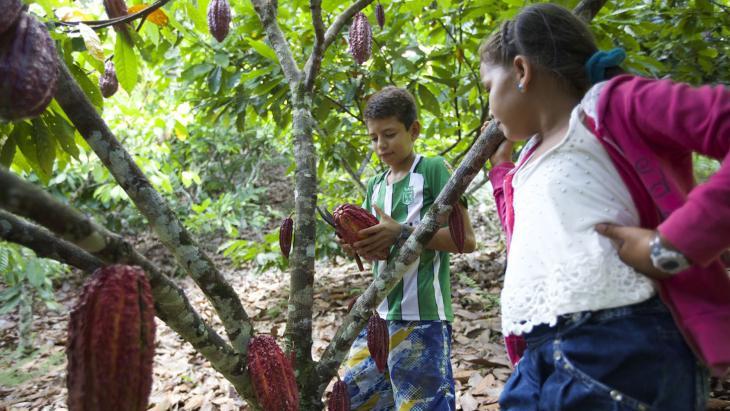 In de achtertuin van Kevin groeit cacao.